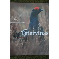 Tetervinas (Tetrao tetrix)